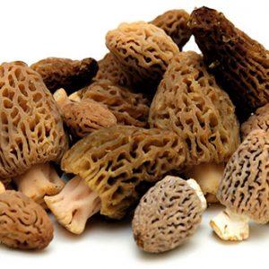 Fresh Morels Mushrooms